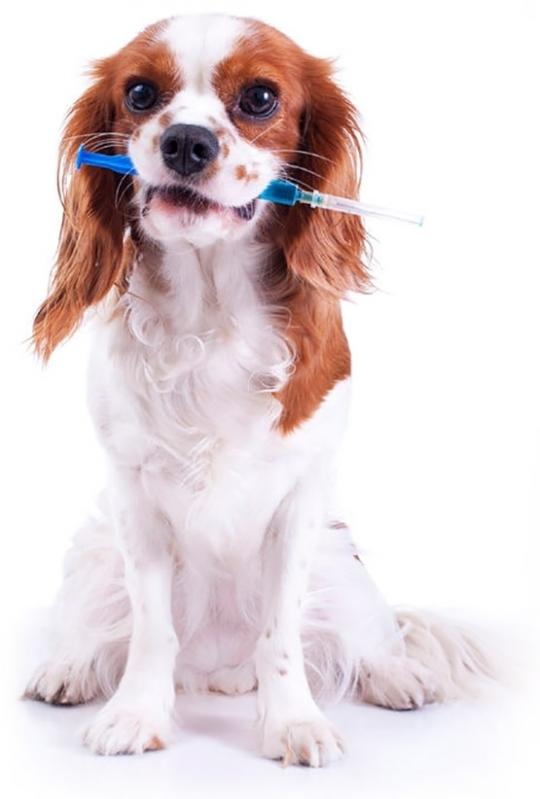 Aonde Tem Vacina para Animais Higienópolis - Vacinação Clinica Veterinária