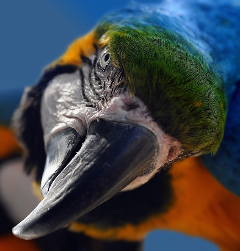 Aonde Tem Veterinário Animais Exóticos Jardins - Veterinário Aves