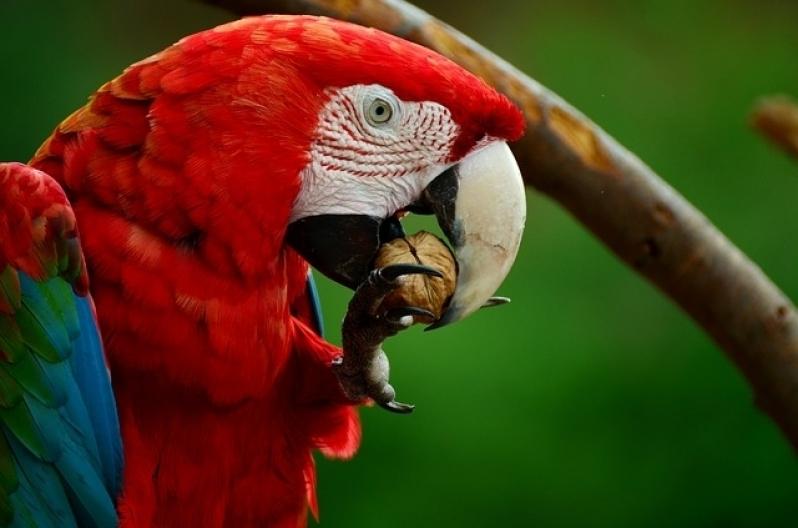 Aonde Tem Veterinário de Pássaros Pari - Veterinário Animais Exóticos