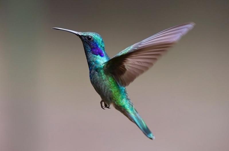 Aonde Tem Veterinário para Aves Pari - Veterinário Animais Silvestres