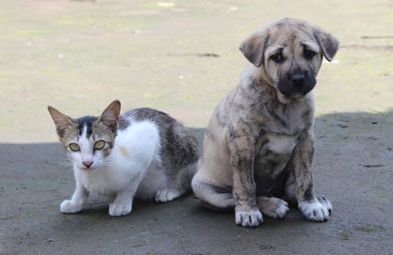 Atendimento Médico para Animais em Residência