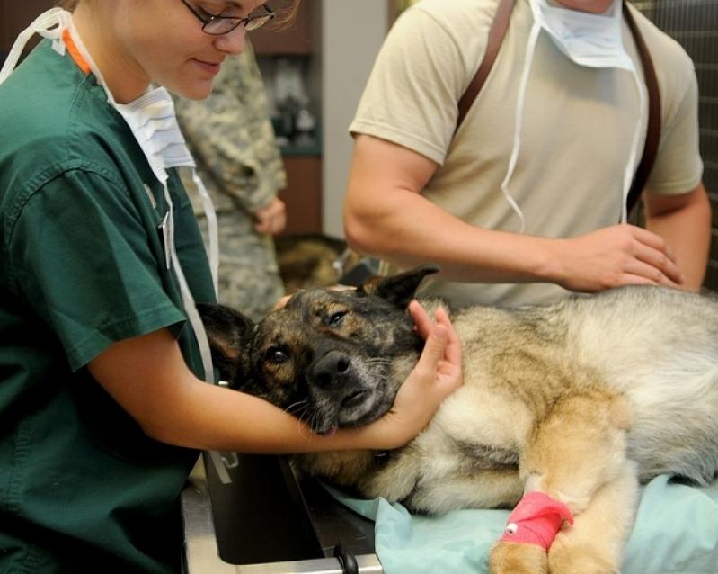 Onde Encontro Tratamento de Feridas Abertas em Cães Brás - Tratamento de Feridas em Cães e Gatos