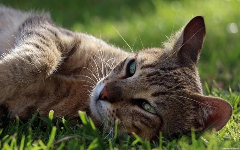 Onde Encontro Tratamento de Feridas em Grandes Animais Freguesia do Ó - Tratamento de Feridas em Cães e Gatos