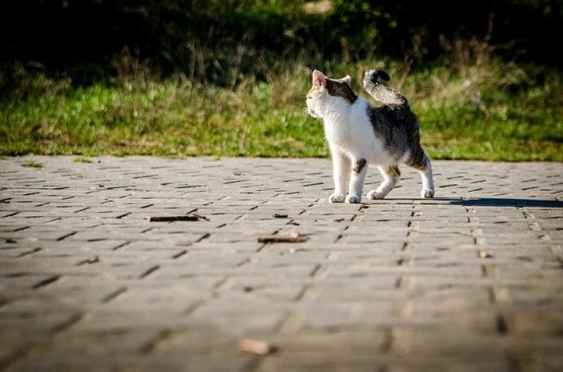 Onde Encontro Tratamento de Feridas em Pequenos Animais Vila Mariana - Tratamento de Feridas Abertas em Gatos
