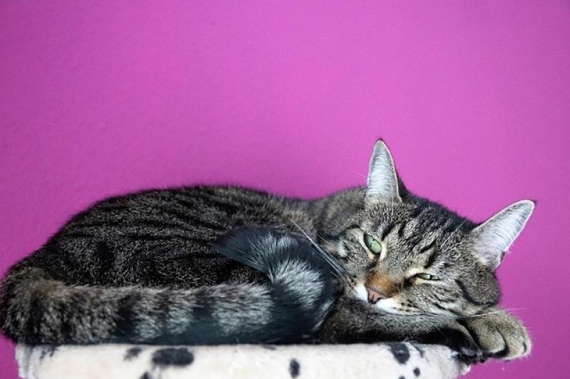 Onde Encontro Tratamento para Feridas em Gatos Pedreira - Tratamento de Feridas em Cães e Gatos