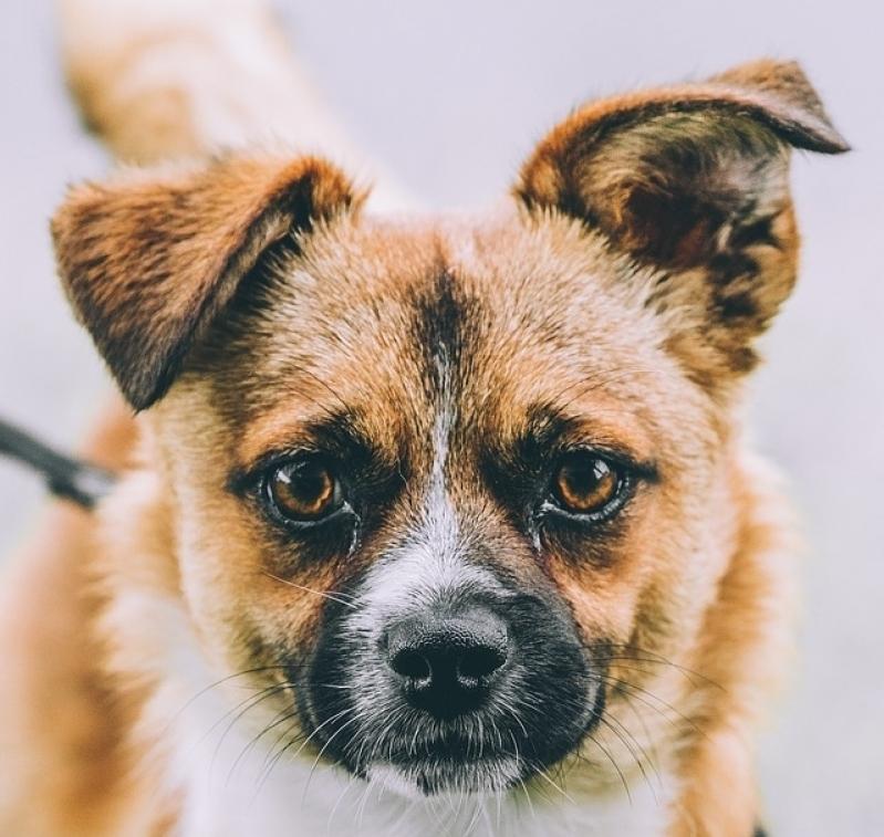 Onde Encontro Vacinas Clinica Veterinária Santa Efigênia - Vacina em Animais