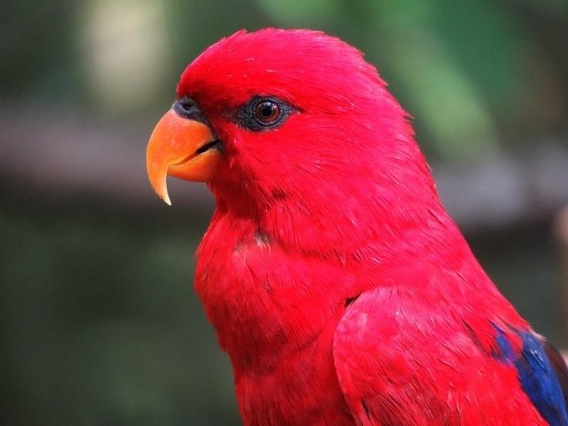 Onde Encontro Veterinário Animal Exótico Jardins - Veterinário de Aves