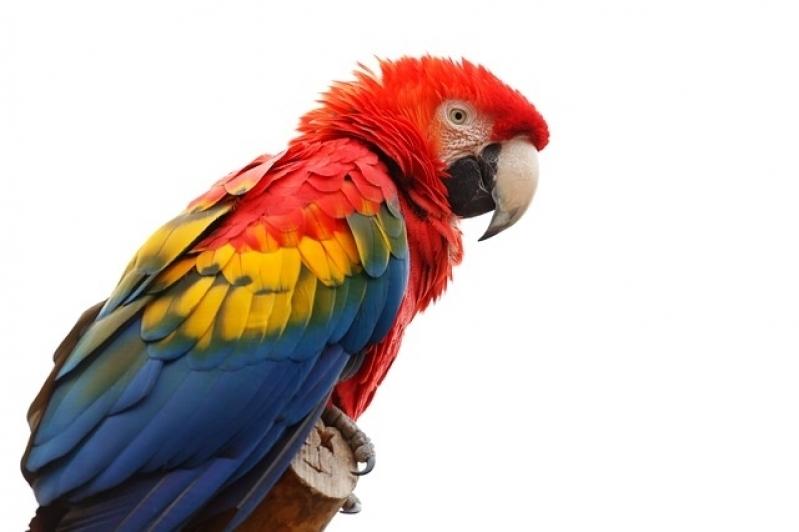 Onde Encontro Veterinário de Animais Exóticos Água Rasa - Veterinário para Aves