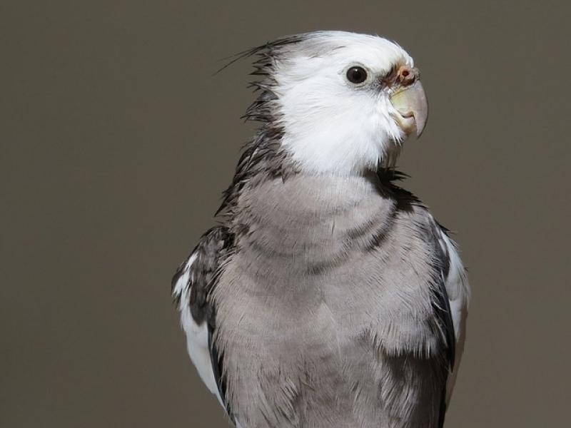 Onde Encontro Veterinário de Aves Santana - Veterinário de Animais Silvestres