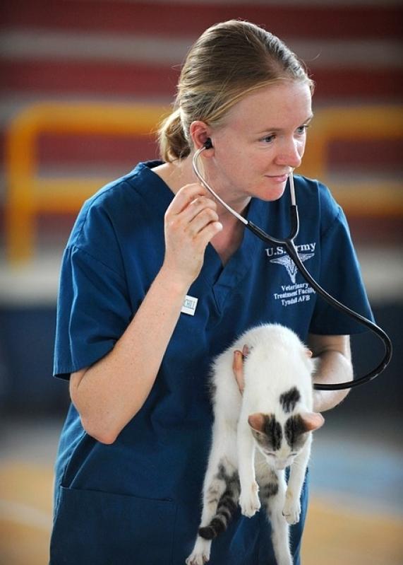 Quanto Custa Tratamento de Feridas Abertas em Gatos Pirituba - Tratamento de Feridas em Cães e Gatos