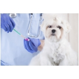 aonde tem vacinas clinica veterinária Vila Gustavo