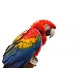 aonde tem veterinário de aves Sé