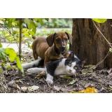 atendimento para animais em casa Cidade Dutra