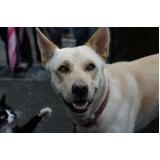 atendimento para cães em casa preço Raposo Tavares