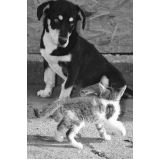 atendimento para cães em casa valor Perus