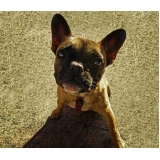 atendimento para cães em casa Tatuapé