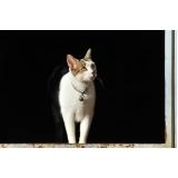 atendimento para gatos em casa preço Água Funda