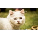 atendimento para gatos em casa valor Brás