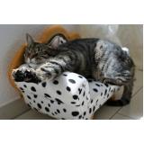 atendimento para gatos em casa Bom Retiro