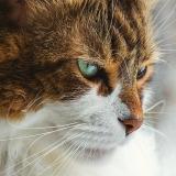 atendimento veterinário a domicílio valor Glicério