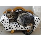 atendimento para gatos em casa