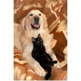 atendimento veterinário para cães preço Jabaquara