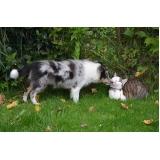 atendimento veterinário para cães valor Pedreira
