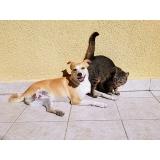 atendimento veterinário para cães Cidade Patriarca
