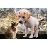 atendimento veterinário residencial Saúde
