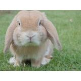 clinica veterinária animais preço popular Lapa