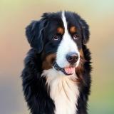 consulta rápida veterinária valor Perdizes