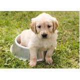consulta veterinária para animais domésticos Campo Belo