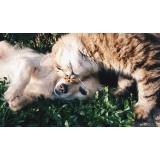 consulta veterinária para animais exóticos valor Cidade Dutra