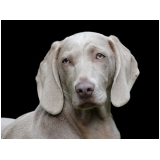 consulta veterinária para animais exóticos Água Branca