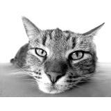 consulta veterinário Morumbi