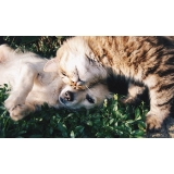 consulta veterinária para animais exóticos