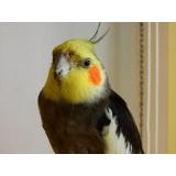 médico veterinário de aves preço Santa Cruz