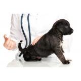 médico veterinário preço popular Interlagos