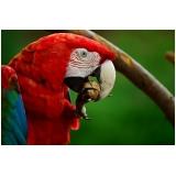 médico veterinário de aves