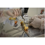 médicos veterinários ortopedistas Barra Funda