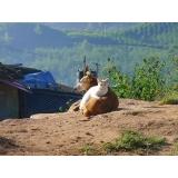 onde encontro atendimento para cães residencial Guaianases