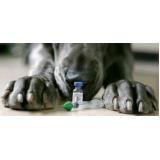 onde encontro clinica para cachorro Pari