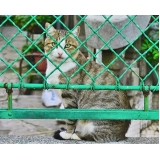 onde encontro consulta veterinária residencial Jaraguá