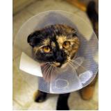 onde encontro tratamento de feridas abertas em gatos Jockey Clube
