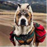 onde encontro tratamento de feridas em animais domésticos Centro