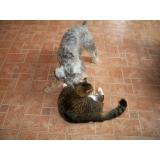 onde encontro tratamento de feridas em cães e gatos Parque do Carmo