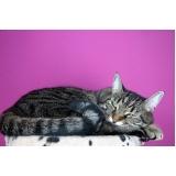 onde encontro tratamento para feridas em gatos Pedreira