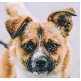 onde encontro vacina para cachorro filhote Anália Franco
