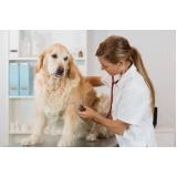 onde encontro vacinação a domicílio para animais Centro