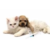 onde encontro vacinação em animais de companhia Aeroporto